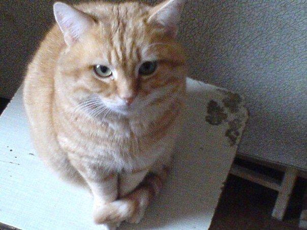 Віддається в добрі руки котик Ласкавий, молоденький, кастрований Привчений до лотку (095)461 25 17
