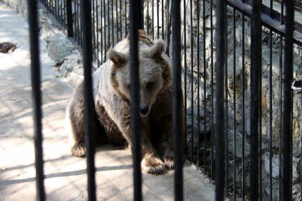 Дівчинка, якій ведмідь відкусив руку, прийшла з меншою сестрою на роботу до батька