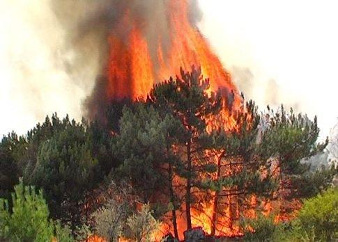 Лісівники та пожежники просять полтавців не ходити до лісу