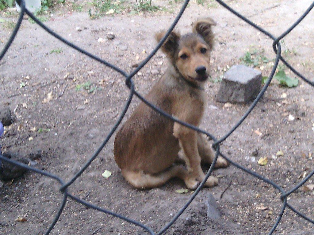 Полтавці майстрували будки для безпритульних собак (фото)