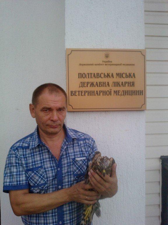 Полтавці врятували сокола, якого знайшли на вулиці
