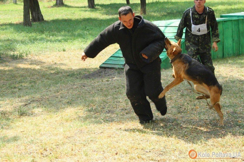 У Полтаві крадії, тікаючи, випадково забігли в кінологічний центр, де тренували собак