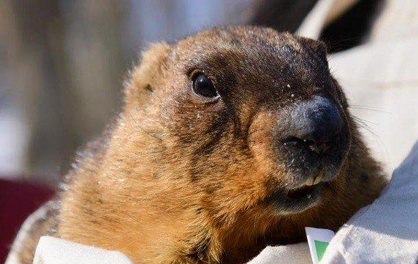Бабак у Харкові навіщував весну через шість тижнів
