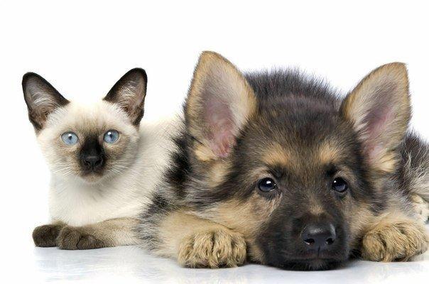 Як зупинити пронизливі крики котів та собак під час шлюбного періоду