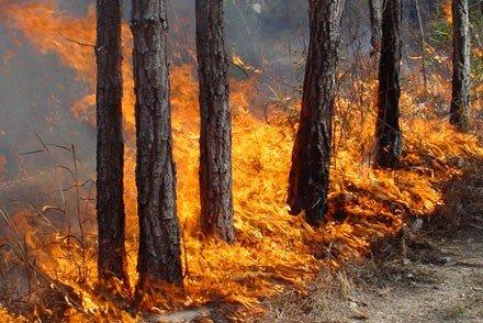 Полтавцям заборонили ходити до лісу