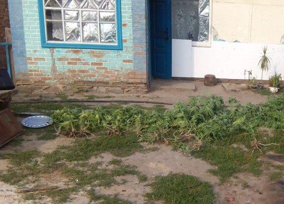На Полтавщині подружжя у теплиці вирощувало коноплі