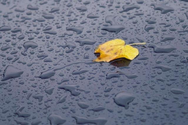 «Бабине літо» закінчилось і варто чекати похолодання зі зливами