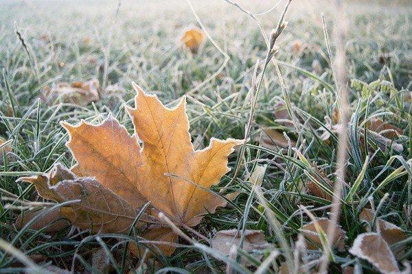Синоптики прогнозують похолодання та заморозки: погода у Полтаві на наступний тиждень