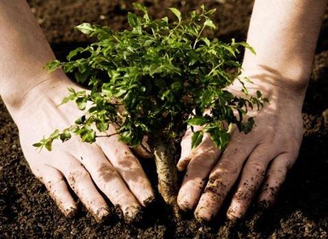 Жителів Полтавщини та підприємства закликають долучитись до акції «Дерева миру»
