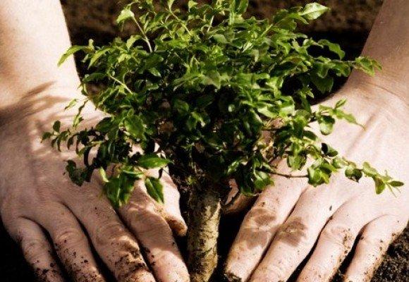 В Управлінні ЖКГ не знають, скільки коштує осіннє «озеленення» Полтави