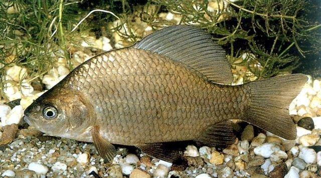 Полтавцям нагадали штрафи за порушення правил риболовлі