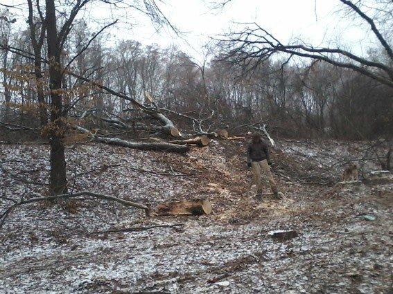 На Полтавщині невідомі незаконно вирубували дуби та ясені