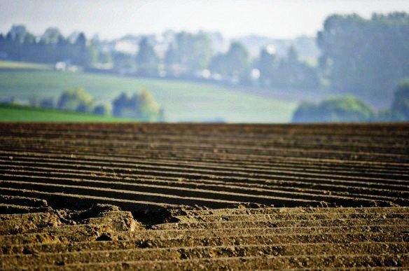 У Полтавській області на землі за рік заробили 2,6 мільйона гривень