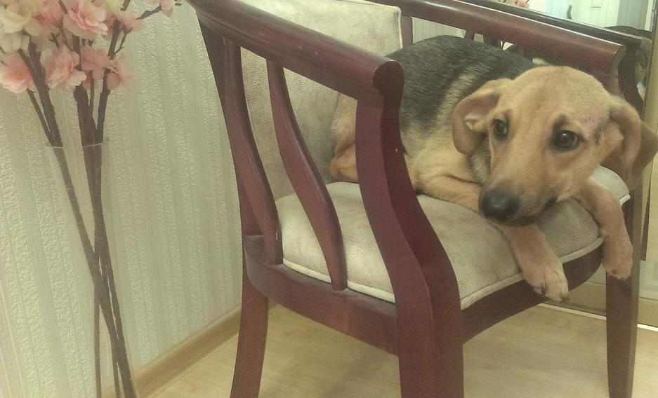 У Полтаві безпритульні тварини шукають господарів