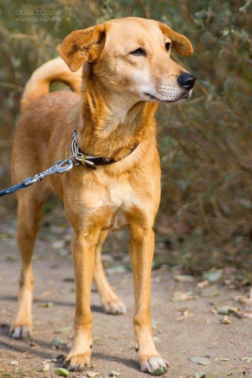 Безпритульні тварини у Полтаві шукають господарів (ФОТО)