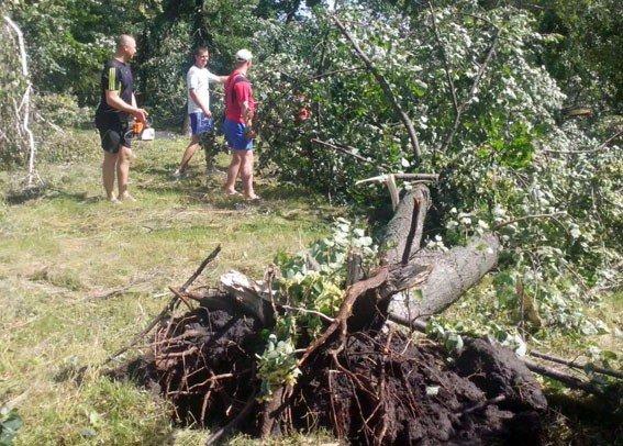 На Полтавщині буревій знеструмив 43 населених пункти та завалив дерева