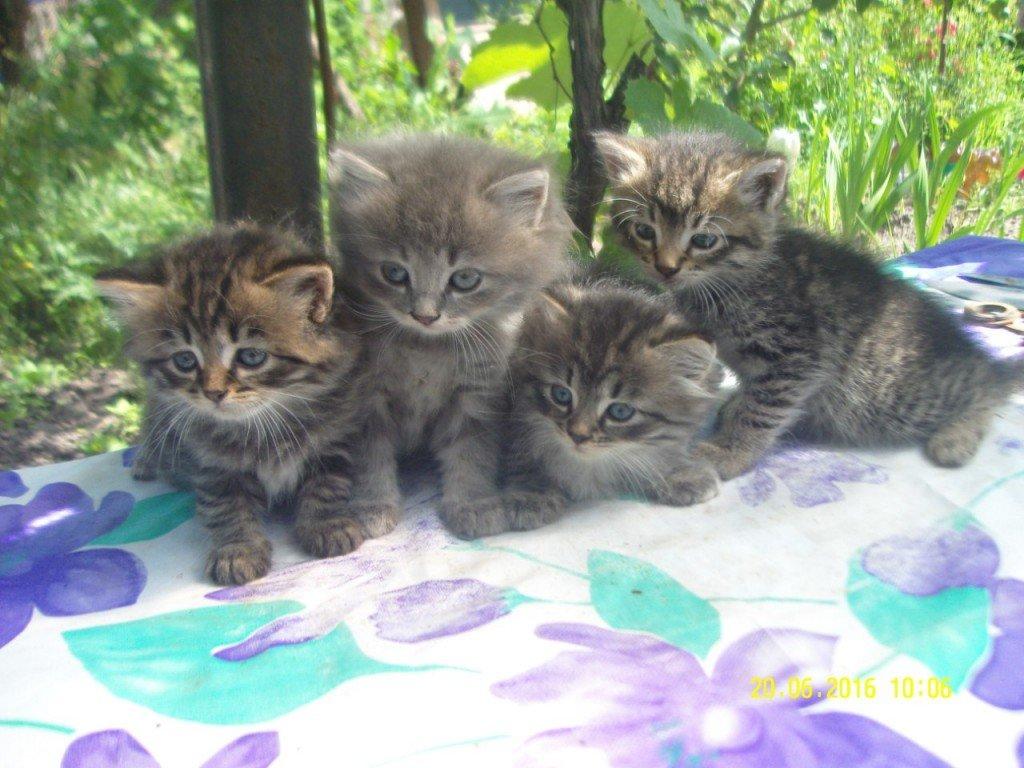 Безпритульні тварини шукають господарів (ФОТО)