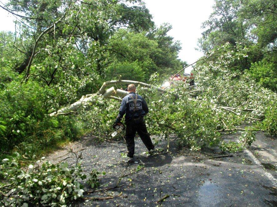 На Полтавщині негода повалила 12 дерев на дорогу