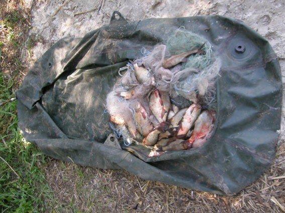 На Полтавщині браконьєр виловив риби на вісім тисяч гривень
