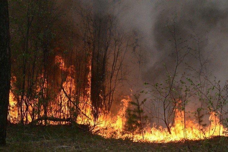 У гадяцькому районі згоріло майже півгектара лісу