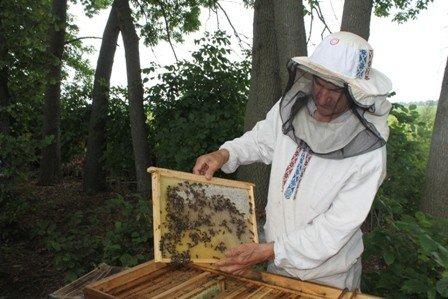 Унікальне училище в Гадячі, де навчають бджолярів, під загрозою закриття
