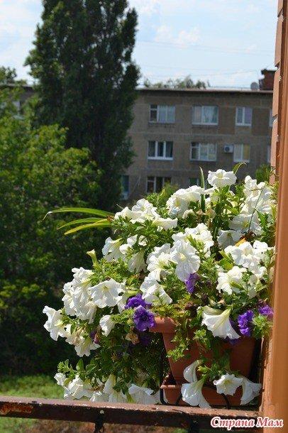 Конкурс «Мій балкон» («Моя клумба»): нова учасниця
