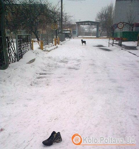Полтавські собаки пильно стережуть територію