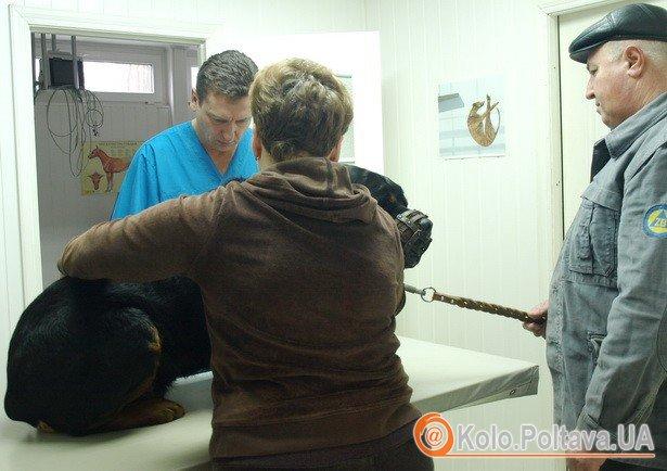 Вилікувати у тварин можна будь-яку хворобу, головне - вчасно звернутися (Фото Валентини Зайченко - 3 шт.)