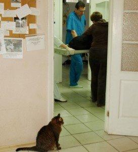 Якщо тварин стерилізувати, то це зменшить вірогідність захворіти на рак