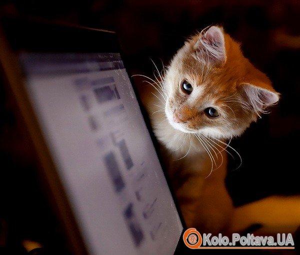www.goodfon.ru