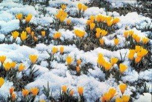 Синоптики розповіли про погоду в березні