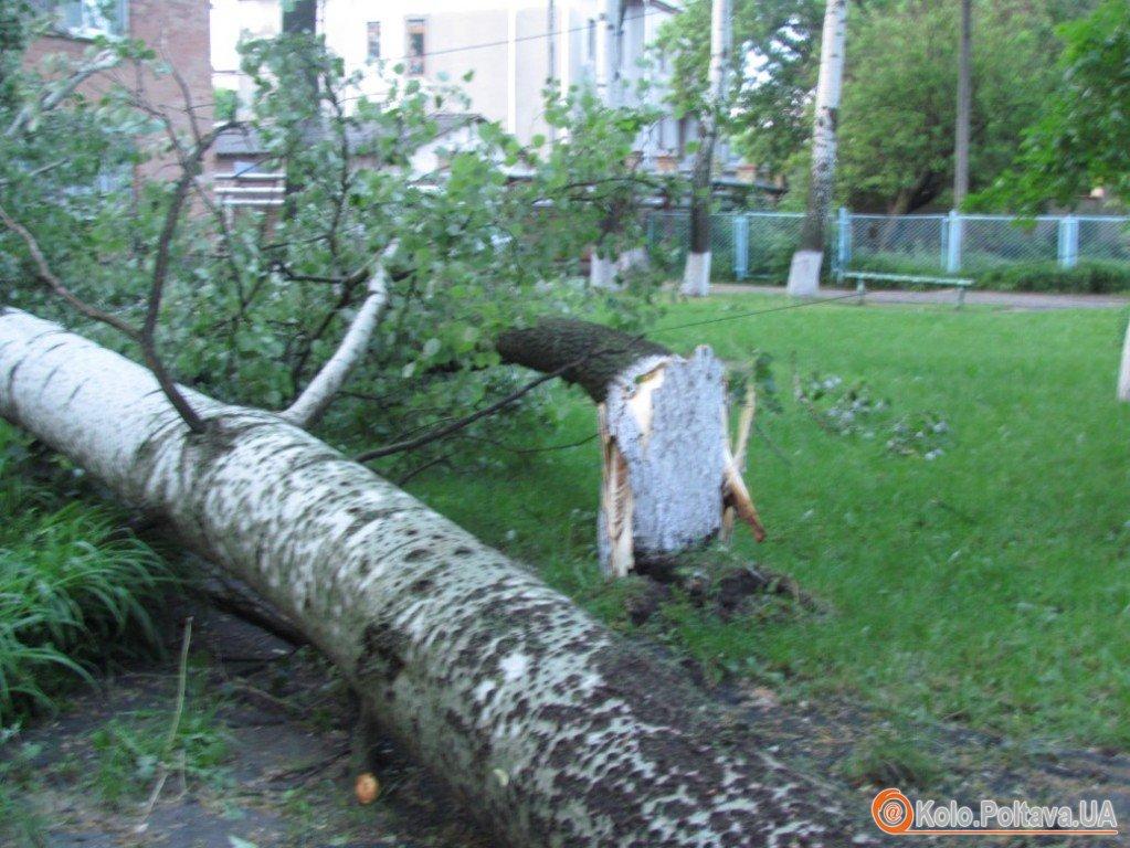 Від буревію у Полтаві падали дерева та обривались дроти (фото)