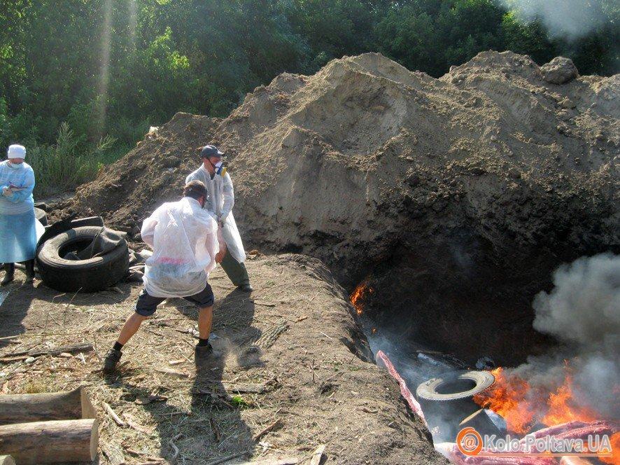 Сергій Аранчій розповів, чому не варто було переносити місце спалу хворих свиней