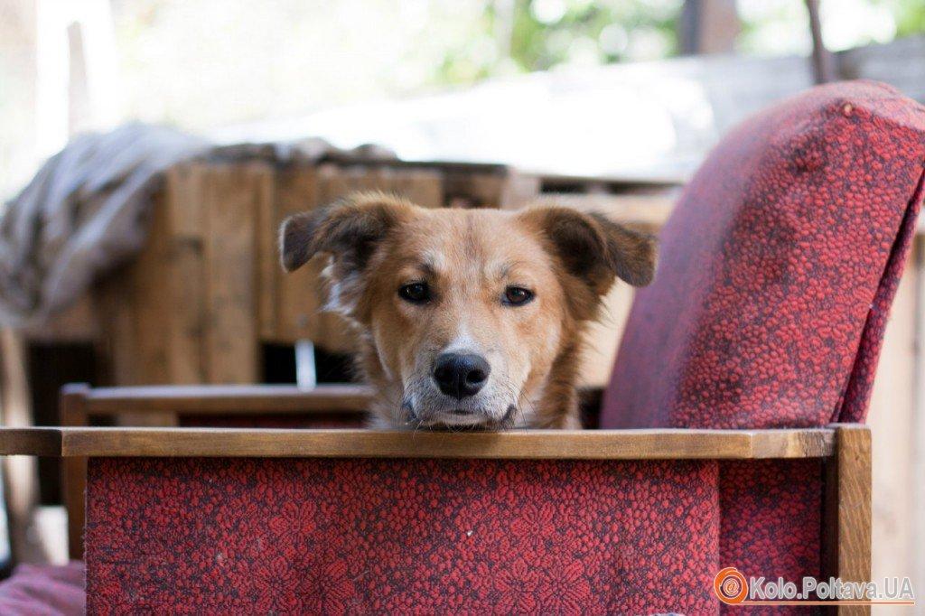 Шукають домівку собаки з приватної перетримки Є дівчата (стерилізовані) і хлопці Як для охорони, так і для душі Від невеликого розміру до великих екземплярів На будь який колір і смак Телефонуйте 066 543 99 35 Лена