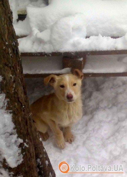 У Полтаві безпритульні тварини шукають господарів (ФОТО)