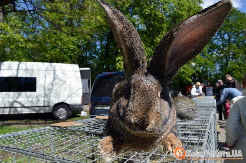 У Полтаві проходить виставка продаж свійський тварин (фоторепортаж)