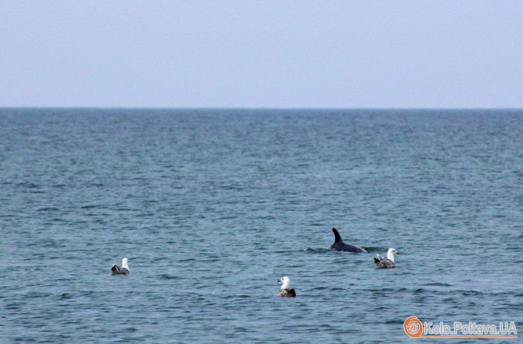 Дика перлина Чорного моря острів Джарилгач