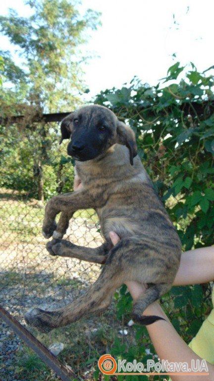 Безпритульні тварини шукають нових господарів (ФОТО)